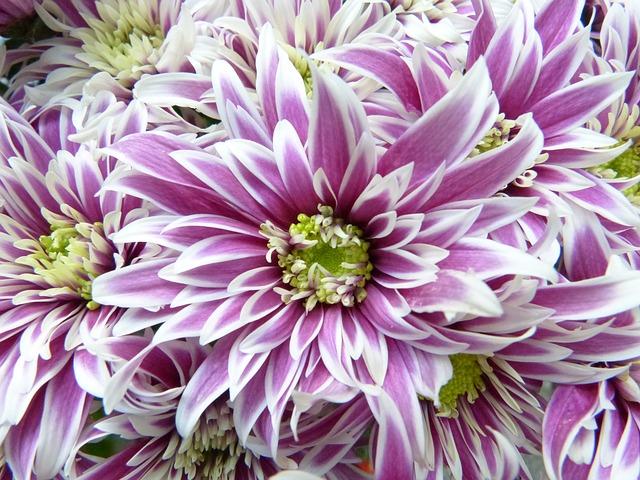 flower-913326_640