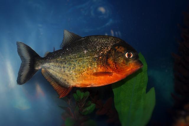 piranha-587666_640